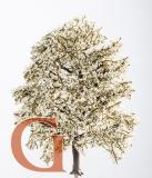 Apfelbaum Frühling
