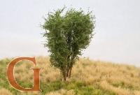 Laubbaum, 10 cm, savannengrün