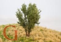 Laubbaum, 10 cm, birkengrün