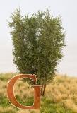 Laubbaum, 13 cm, birkengrün