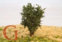 Laubbaum, 10 cm, eichengrün