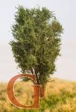 Laubbaum, 13 cm, eichengrün